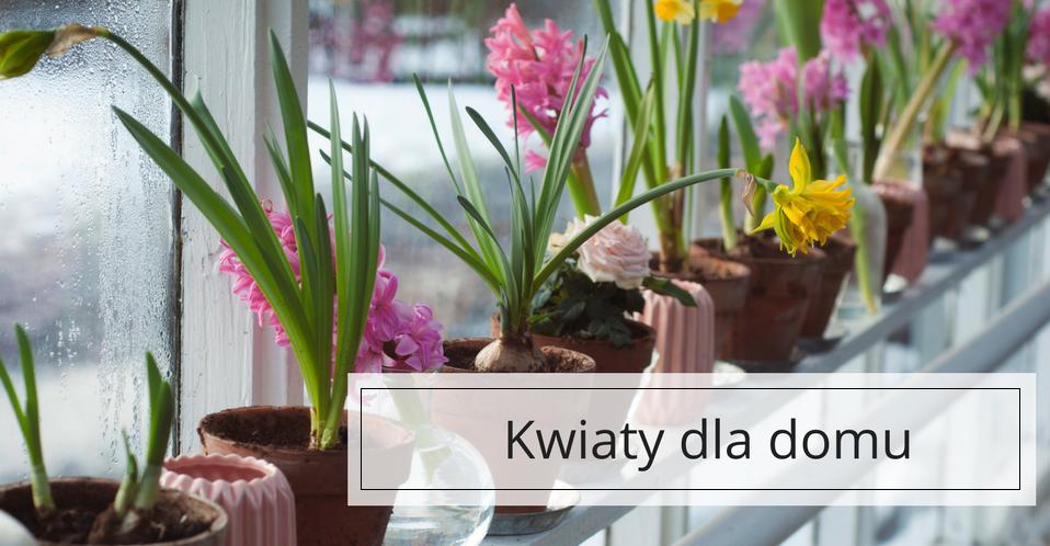 Kwiaty Domowe Jakie Gatunki Urozmaicą Twoje Wnętrze Blog
