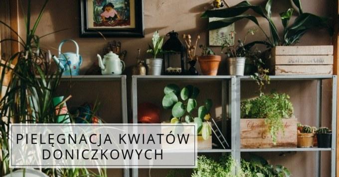 Zadbaj o domowe rośliny
